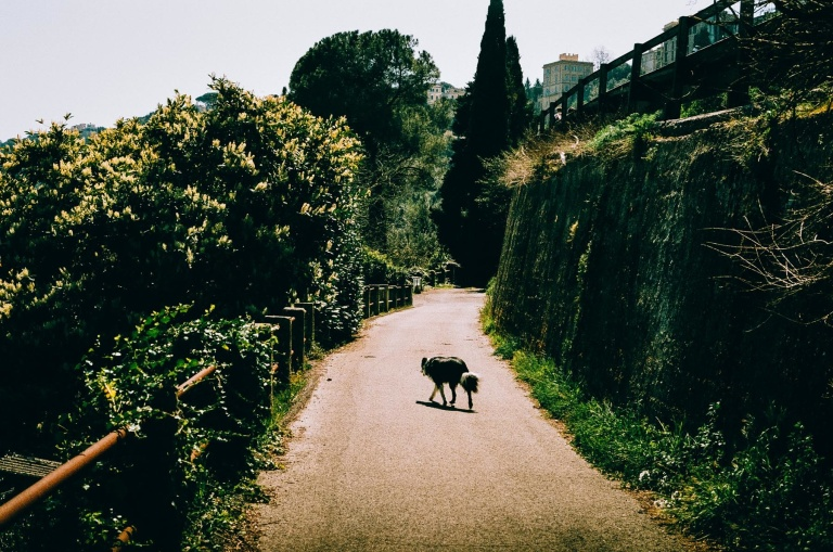Rome_Film_6_000016870023_mqvrk8