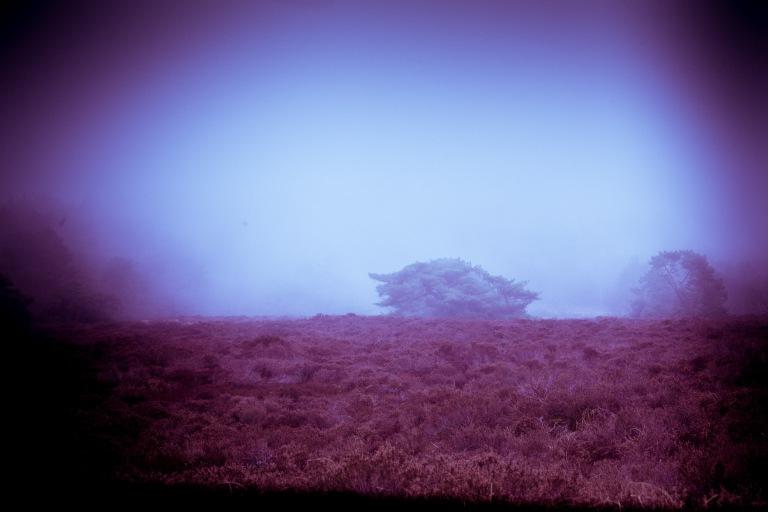 03132017 Schoorlse Dunes EX_0206-2